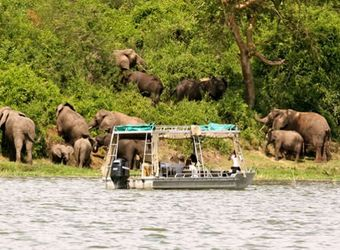 Safari guests get up close and personal with African elephants on a safari boat along the coast of a river in Queen Elizabeth National Park, Uganda