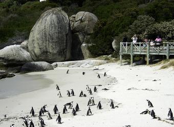 Photo: Wildlife Viewing & Activities