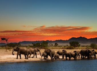 Photo: Zimbabwe Wildlife