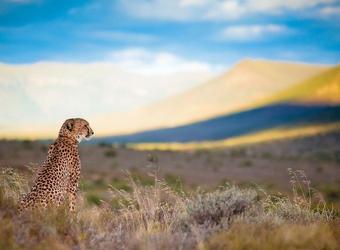 Photo: The Safari Experience