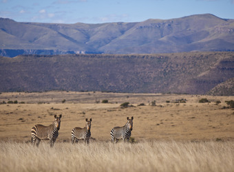 Photo: How to Include the Great Karoo in Your Safari Itinerary