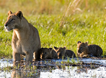 Photo: Botswana Wildlife