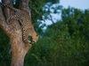 Photo: Conservation