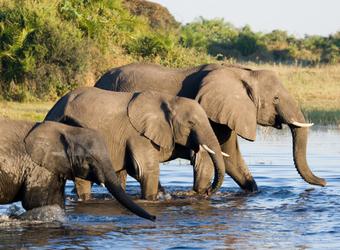 Photo: Quick Botswana Facts