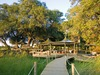 Little Vumbura Camp, welcoming wooden path to safari camp, sea of green grasses, enveloping trees above lounge area, Africa safari, Botswana