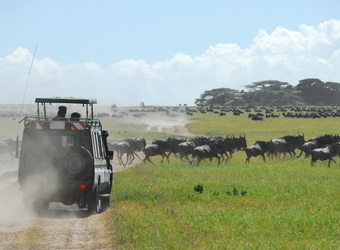 Photo: Tanzania Safari Highlights