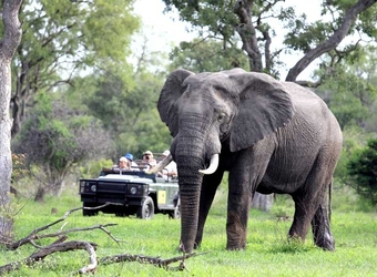 Photo: South Africa Safari Highlights