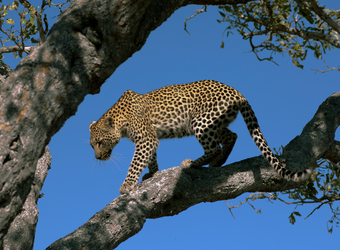Photo: South Africa Wildlife