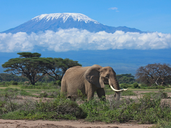 Kenya facts: discover this amazing African country! | National ...