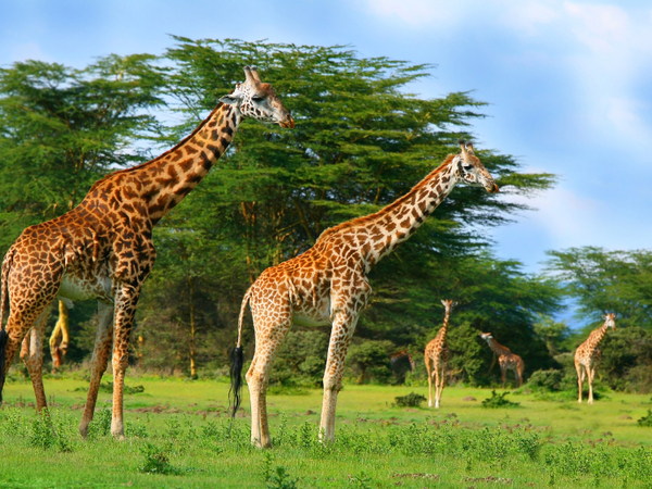 South African Wild Animals Facts