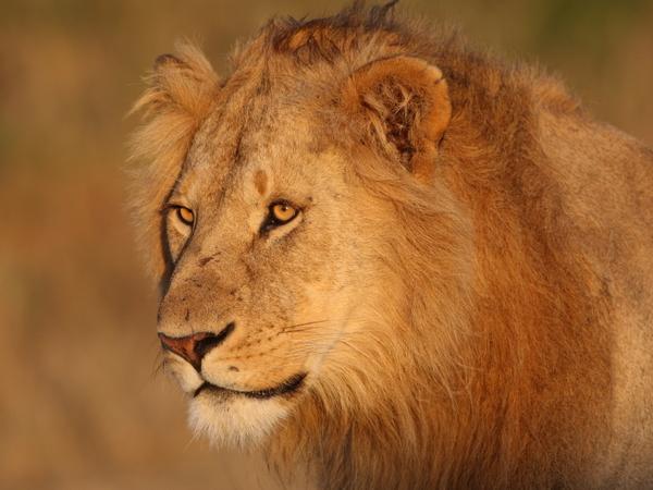 An African Animal safari in the rain | Encyclopedia of wild ...