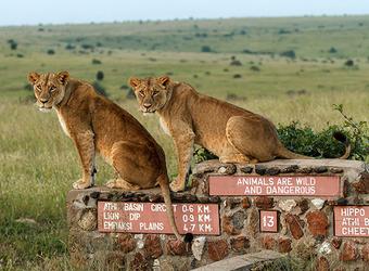 Photo: Wildlife & Activities
