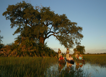 Three grooved canoes, each with their own individual safari guest and guide being poled around the Okavango Delta, Botswana