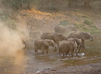 A clear shot of a herd of elephants taking a respite in a watering hole to cool down and have a drink in Kruger National Park, South Africa
