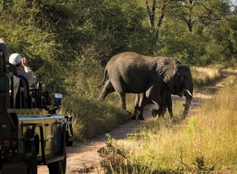 Mother elephant and baby elephant cross a road as unlooking safari guests take pictures from their rover in Sabi Sand Reserve, South Africa