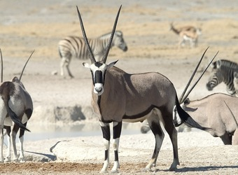 Photo: Namibia Wildlife