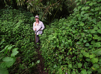 A safari guest stands in a jungle clearing surrounded by vegetation and vibrantly green plantlife on all sides in Volcanoes National Park, Rwanda