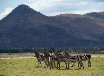 Zebras survey the surrounding grasslands with a ridge of mountains in the distance and the sunlight shining down in South Luangwa National Park