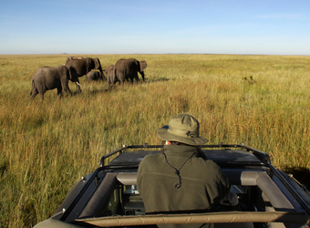 A safari guest prepares to take a picture from the sunroof of a safari vehucle aiming at a few African elephants in Serengeti National Reserve, Tanzania