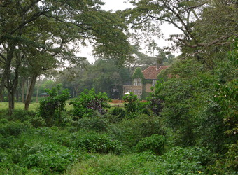 View of a building completely surrounded by nature and encroaching plantlife and vines in Nariobi, Kenya