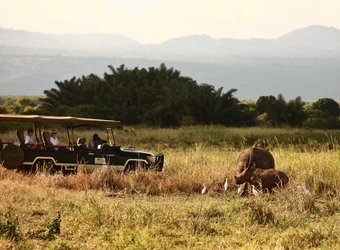 A group of tourists in a safari vehicle get up close and personal with a couple of rhinos in Meru National Park, Kenya