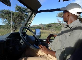 A guide watches a giraffe walk through the bush from his safari vehichle in the Chuylu Hills, Kenya