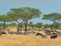 Tanzania-Main