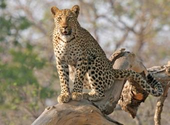 Sidebar_countries-southafrica