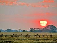 Zambia-main