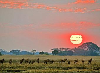 Sidebar_countries-zambia
