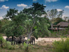 tanda tula elephants in camp