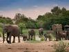 tanda tula elephant herd