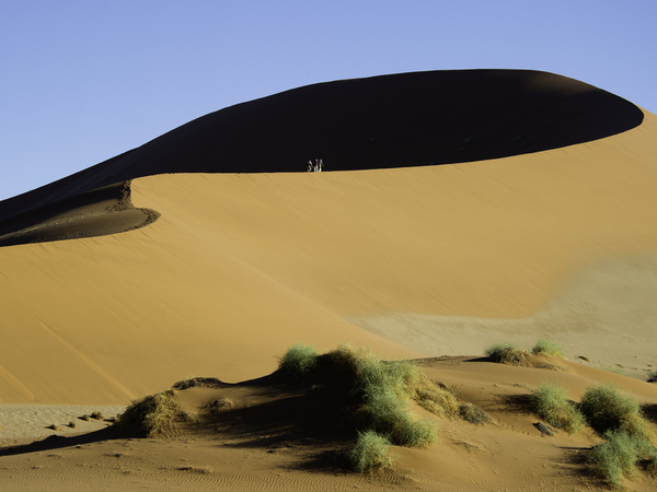 Large_kulala_desert-9