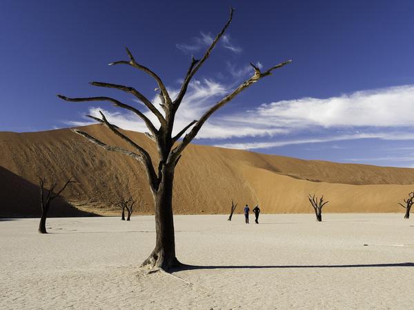 Large_kulala_desert-10