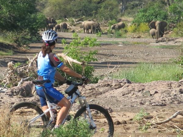 Large_mashatu_cycle_5