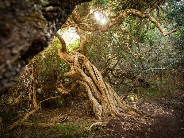 Large_pic1091an-ancient-milkwood-forest-lr