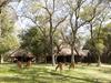 Dulini camp animals