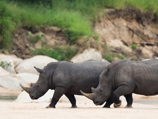 Large_ulusaba_safari_-_conservation