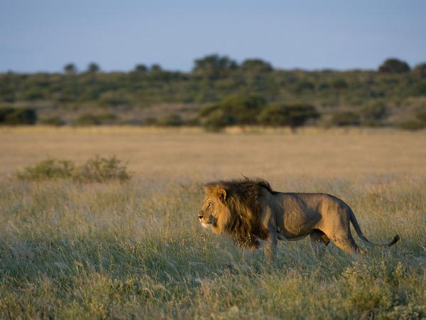 Large_mm_kalahariplains_wildlife_09_25