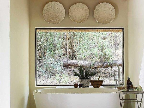 Large_londolozi_tree_-_4