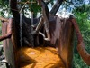 Tobu Tree Camp, safari shower made out of the trunk of a living tree incorporating the branches into the design in Botswana, Africa safaris