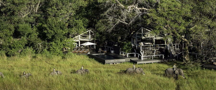 Guides lead a trail of guests via an elephant backed bushwalk next to famed Abu Camp, line of elephants marching through tall grasses, swimming pool