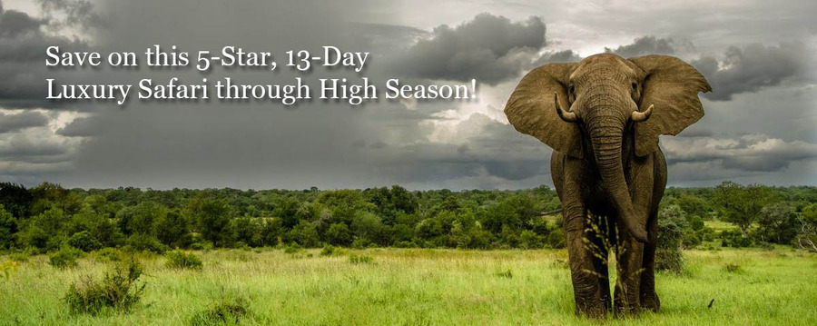 A majestic African elephant walks across the vibrant green grass and shrublands as thunderstorms approach in the sky, elephant tusks, African safari