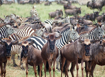 Photo: Serengeti Nat'l Park