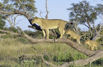 Photo of Linyanti / Savuti Reserves