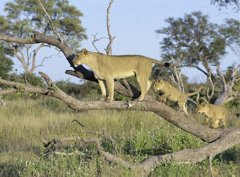 Photo: Linyanti / Savuti Reserves