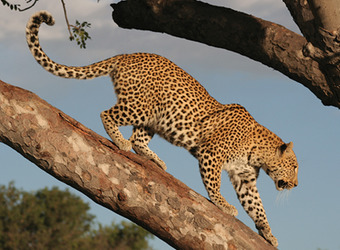 Photo: Ruaha Nat'l Park