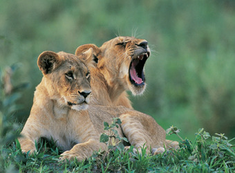 Photo: Maasai Mara Nat'l Reserve
