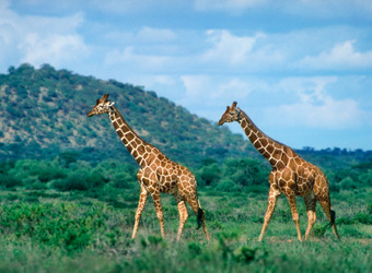 Photo: Shaba Nat'l Reserve