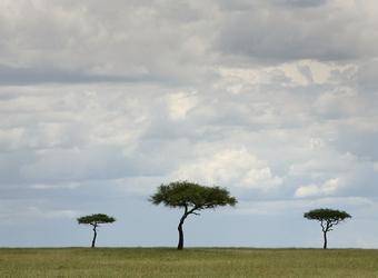 Photo: Nairobi/Home